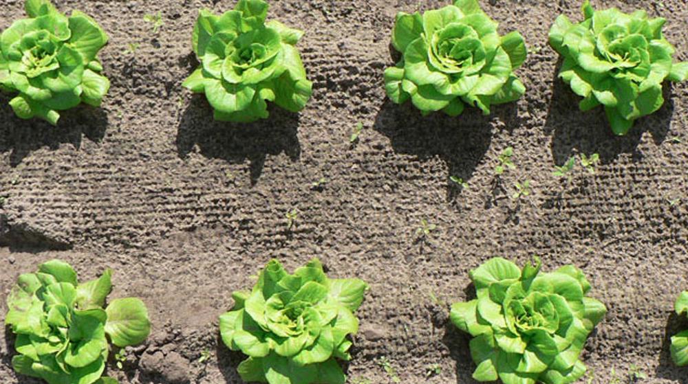 Weed Vision: vous allez adorer jardiner en réalité augmentée