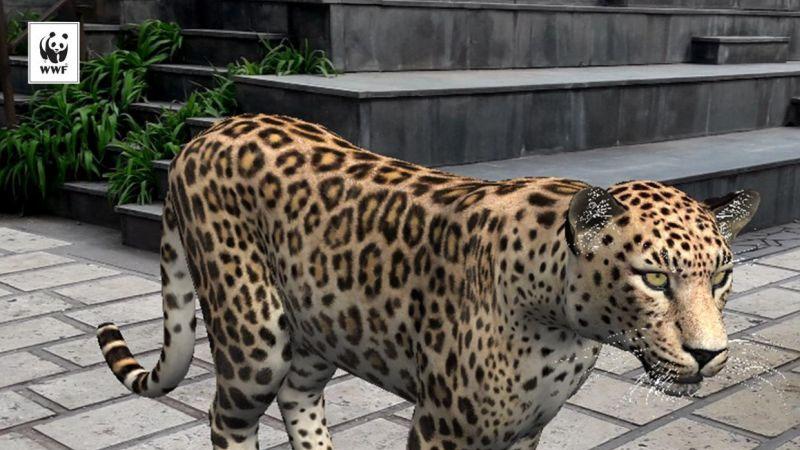La réalité augmentée pour sauver les léopards?